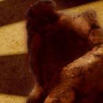 LATINOS: SILVESTRE PECIAR, EL PERIODISTA