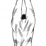 Corpo Fechado