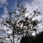 Folhas do vento norte (V). Carta a V.
